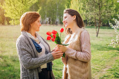 Daughter gives her mother tulips. Mother`s day present. Daughter gives her mother red tulips. Mother`s day present Royalty Free Stock Photos