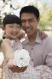 Daughter holding a cherry blossom close to the camera with her father in the park in springtime Stock Image