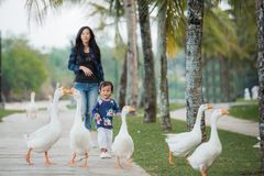 Daughter and mother enjoy playing with goose. Daughter and mother enjoy playing with the goose in the farm royalty free stock image