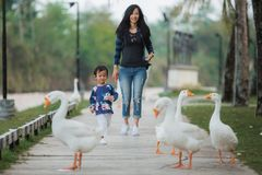 Daughter and mother enjoy playing with goose. Daughter and mother enjoy playing with the goose in the farm royalty free stock photos