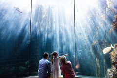 Daughter pointing a fish while her mother and father looking at fish tank Stock Images