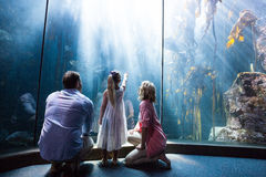 Daughter pointing a fish while her mother and father looking at fish tank Royalty Free Stock Photography