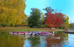 The Daumesnil lake in autumn , Vincennes forest,Paris, France.