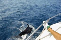 dauphin image stock