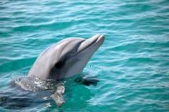 dauphin photographie stock