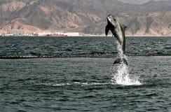 dauphin Photos libres de droits