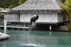 Dauphin commun sautant en dehors du pavillon de Polynésie photo libre de droits