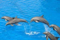 Dauphin dans la piscine Images libres de droits