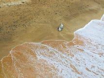Dauphin mort par la mer photos libres de droits
