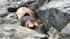 Dauphin mort sur la plage image libre de droits