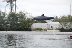 Dauphin pendant l'exposition à Miami Photo libre de droits