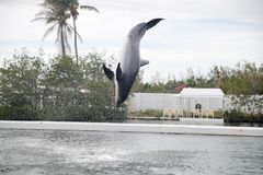 Dauphin pendant l'exposition à Miami Photos stock