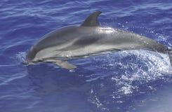 Dauphin sur l'eau de la Sardaigne Photos libres de droits
