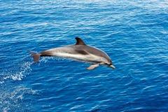 Dauphin tout en sautant en mer bleue profonde Photo stock