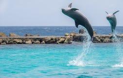 dauphins Images libres de droits