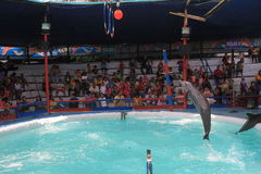 dauphins Image stock