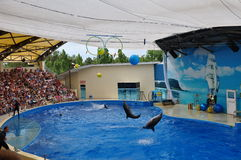 dauphins Photos stock