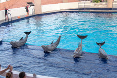 Dauphins dans l'aquarium de Cancun Images libres de droits