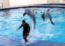 Dauphins dans l'aquarium Mexique de Cancun Image stock