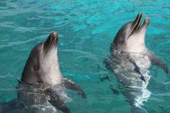 dauphins de bottlenose Photo libre de droits
