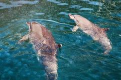 Dauphins en mer Image libre de droits