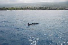 Dauphins Hawaï Photos libres de droits