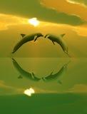 Dauphins jouant dans le coucher du soleil Photo stock