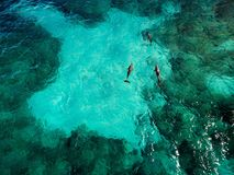 Dauphins sauvages d'Isla Mujeres - vue aérienne images libres de droits