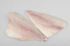 Daurade de filet de poisson cru Images stock