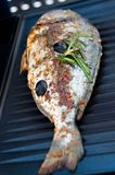 Daurade de Gilthead sur le BBQ Photos stock
