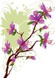 Dauricum van de rododendron stock illustratie