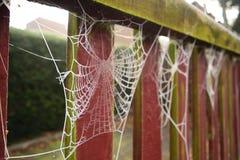Dauw behandeld spinneweb Royalty-vrije Stock Foto's