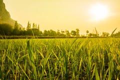 Dauw bij landbouwbedrijf Royalty-vrije Stock Foto's
