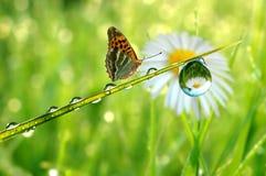 Dauw en vlinder Stock Foto