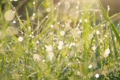 Dauw op de bovenkant van het gras Stock Foto