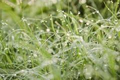 Dauw op de bovenkant van het gras stock afbeeldingen