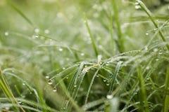 Dauw op de bovenkant van het gras royalty-vrije stock foto
