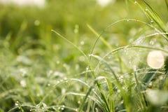 Dauw op de bovenkant van het gras stock fotografie