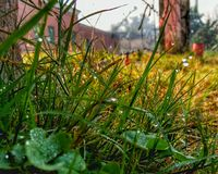 Dauw op de grassen stock fotografie