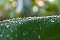 Dauw op een groen banaanblad Royalty-vrije Stock Afbeeldingen