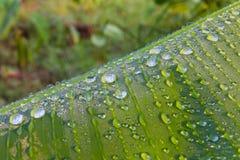 Dauw op een groen banaanblad Stock Afbeelding