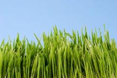 Dauw op gras Stock Afbeelding