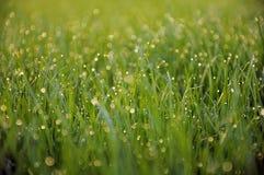 Dauw op gras Royalty-vrije Stock Afbeeldingen