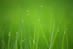 Dauw op gras Stock Foto's