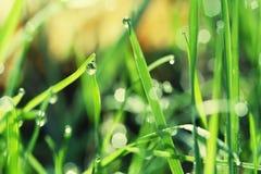 Dauw op Gras tijdens Zonsopgang Stock Foto's