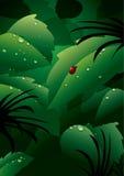 Dauw op groene bladeren Stock Foto