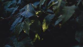 Dauw op groene bladeren royalty-vrije stock foto's