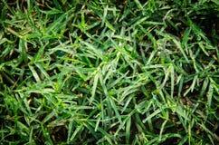 Dauw op het mooie gras Stock Afbeelding