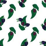 Dauwbraamhand getrokken patroon op wit Royalty-vrije Stock Afbeeldingen