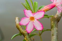 Dauwdaling op bloemen Royalty-vrije Stock Afbeeldingen
